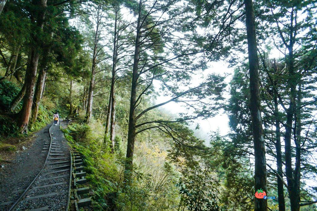 宜蘭太平山旅遊景點一日遊包車  蹦蹦車 見晴懷古步道