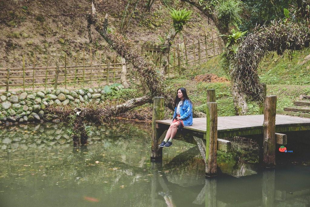 苗栗三義舊山線 森林系打卡景點