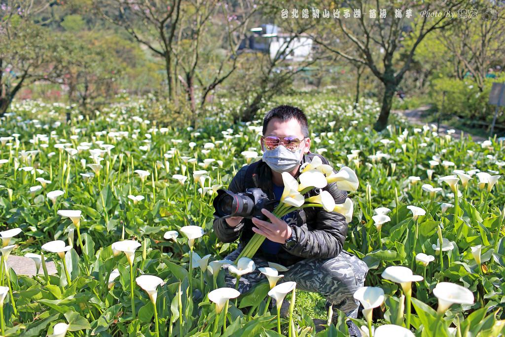 台北陽明山 竹子湖~苗榜 海芋