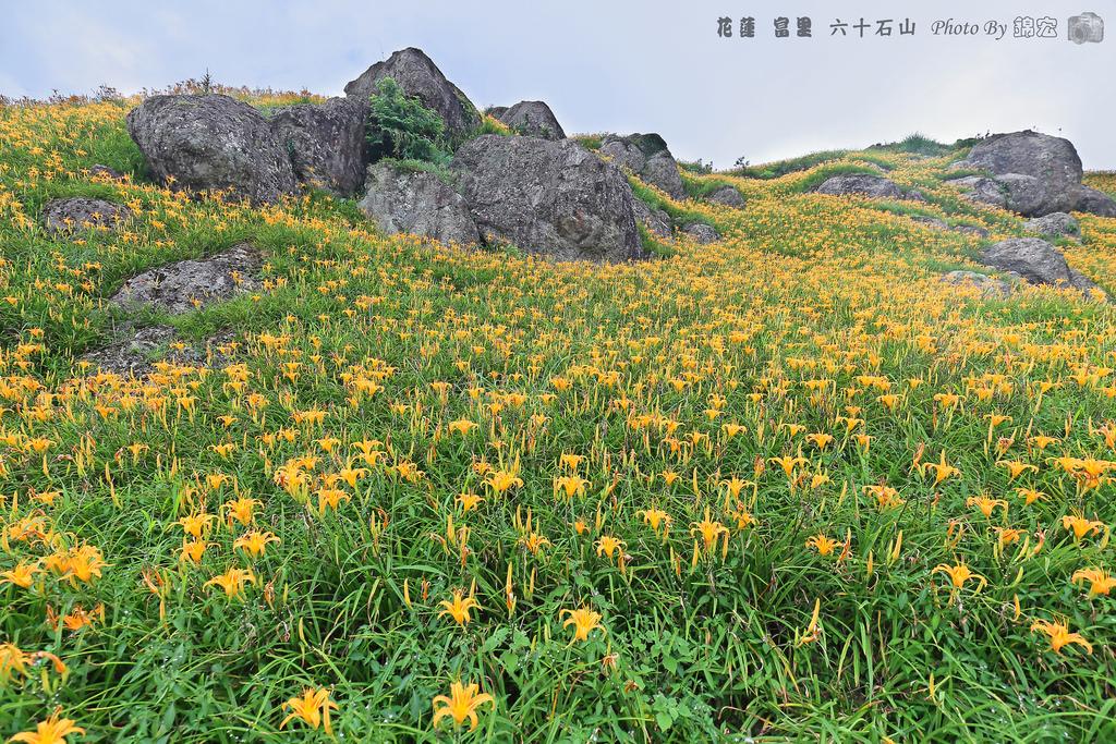 2016.08.27~花蓮 富里 六十石山 金針花海