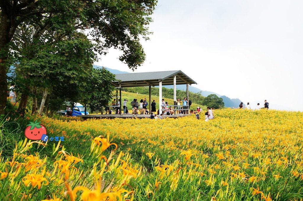 2016 花蓮 富里 六十石山 小瑞士