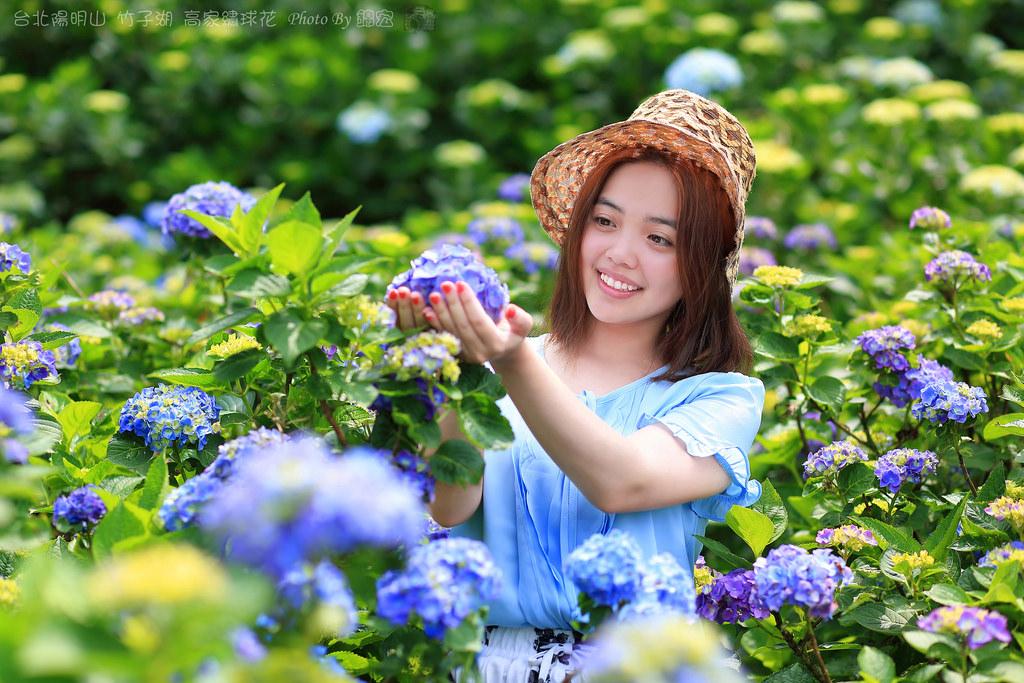2016.05.15~台北陽明山竹子湖高家繡球花