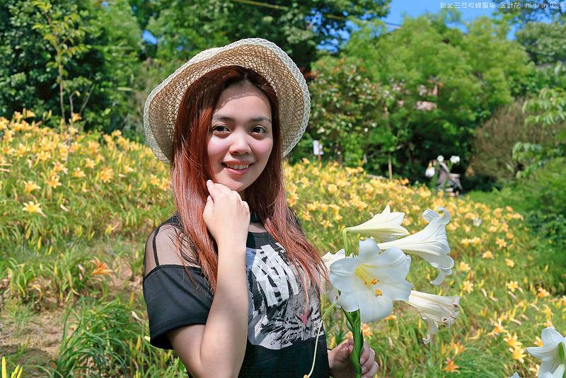 2015.05.16~新北三芝牧蜂農場金針花遊拍